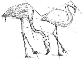 Sketch vector illustration of flamingos