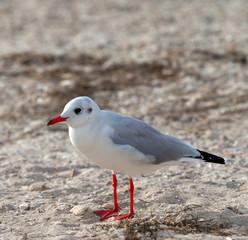 Seagull on sea beach at sun day