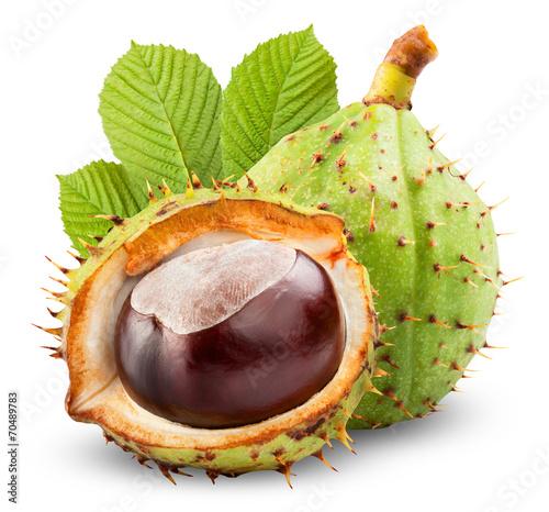 chestnut - 70489783