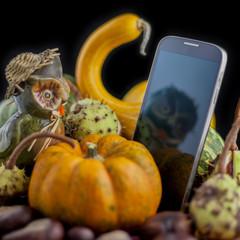 Autumn Owlphone