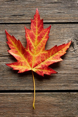 Autumn maple leaf over wooden background