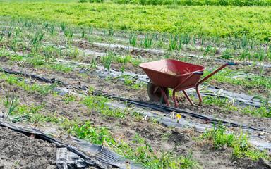 Red wheelbarrow on farm