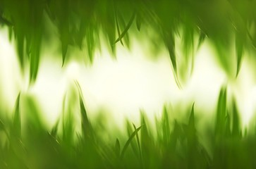 Green vibrant grass background