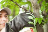 Gardener pruning a tree - 70492704