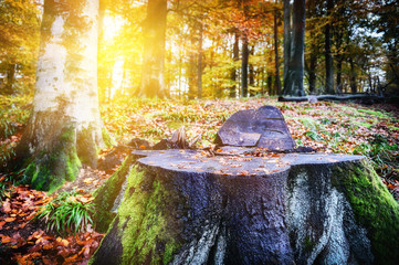 Landscape with big tree stump