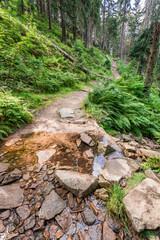 Mountain stream crosses the hiking trail