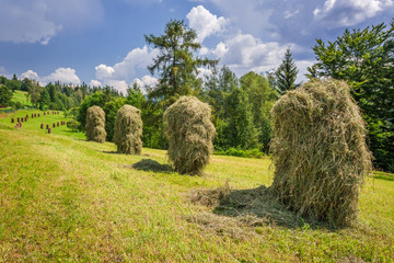 Sheaf of hay hanging to dry on the field