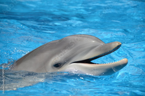Deurstickers Dolfijn Bottlenose Dolphin with Mouth Open