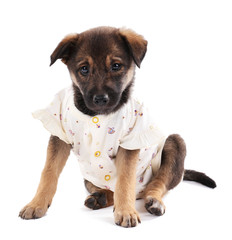 Puppy dressed in clothes for children isolated on white