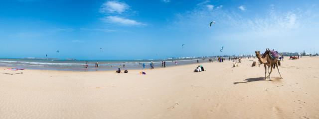 Beach, Kite Surfers and a camel in Essaouira