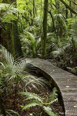 Forest boardwalk
