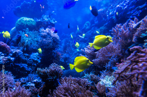 tropical fishes meet in blue coral reef sea water aquarium . Und