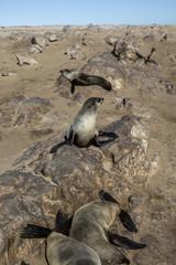 Namibia, Skeleton Coast with seals