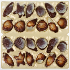 Mixed pieces of chocolate seashell candies
