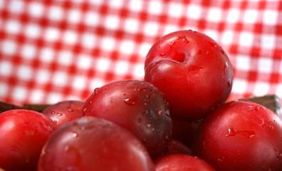 Purplish red organic greengage fresh from the garden