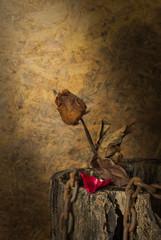 Still Life Metaphorical roses .