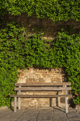 empty seat and of a wall covered with ivy in garden
