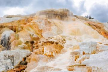 Yellowstone,  Mammoth Hot Springs,  Wyoming, USA