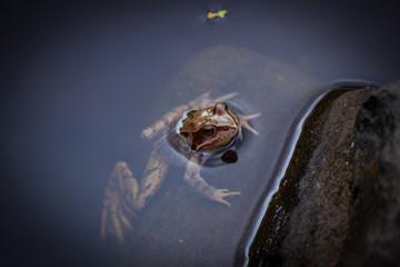 Wunderschöner glitschiger Frosch im Teich