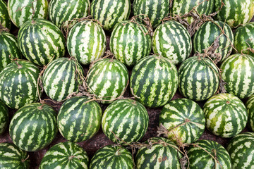Fresh and ripe watermelons