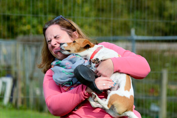 Jack Russell dog kissing lady