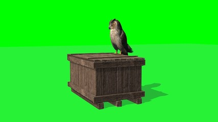 owl sitting on wooden box and looks around - 2 different views