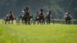 Horse trotting race - 70509571