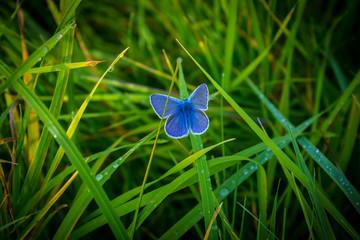 UN Zeichen des Friedens kleiner blauer Schmetterling