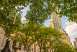 Trees of fifth avenue. New York public library and street skyscr