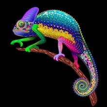 Chameleon Fantasy Kolory tęczy