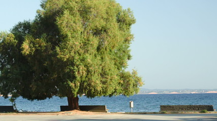 Seafront with benches and green tree