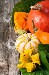 pumpkins over wooden background