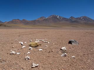 tödliche Dürre - deadly drought