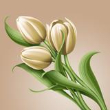white tulips vintage floral illustration, flowers arrangement - 70515774