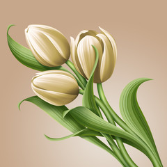 white tulips vintage floral illustration, flowers arrangement