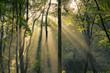 fantastic mornin sunrays shining through trees