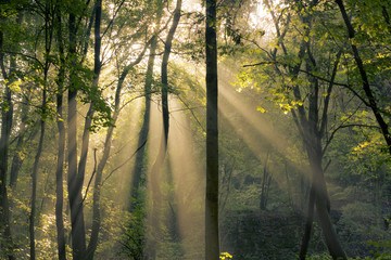 fantastic mornin sunrays shining through trees