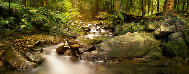 Panoramic image of the forest brook in the mountains