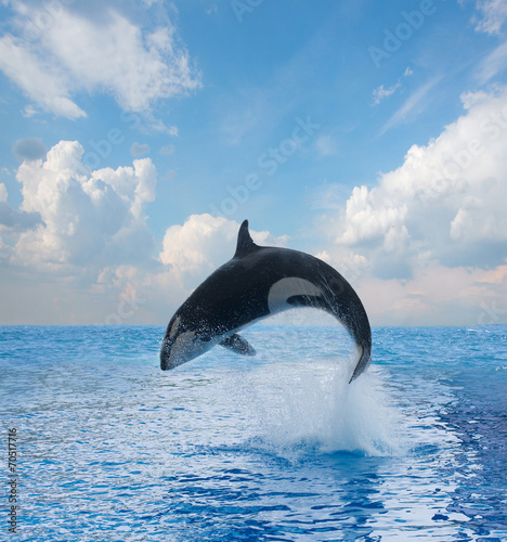 Tuinposter Water jumping killer whale
