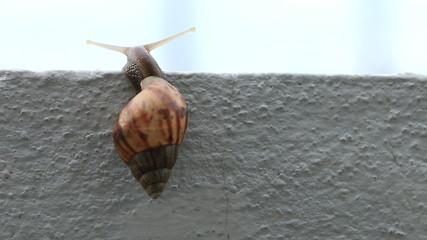 Macro close up snail slips on wall