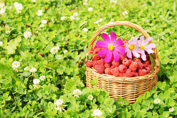 Basket full of raspberry and flowers on green grass