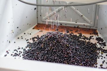 raisins erraflés