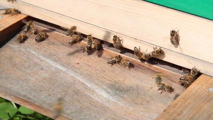 Einflugloch eines Bienstocks, sehr nah