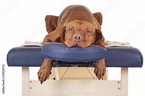 Fotobehang Hond waiting for my massage