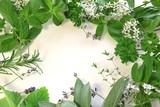 Fototapety frame of herbs
