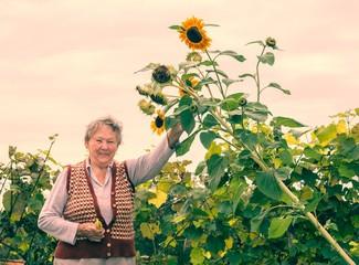 Happy senior woman holding a sunflower plant