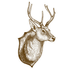 engraving of reindeer head on white background