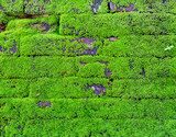 Mosses on a stone wall of ruin