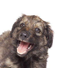 portrait of mongrel on a white background isolated