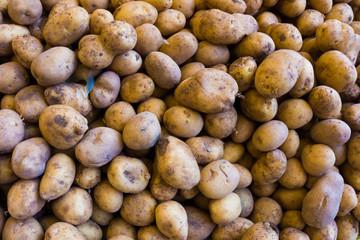 potatoes on a market.  Fresh organic young potatoes